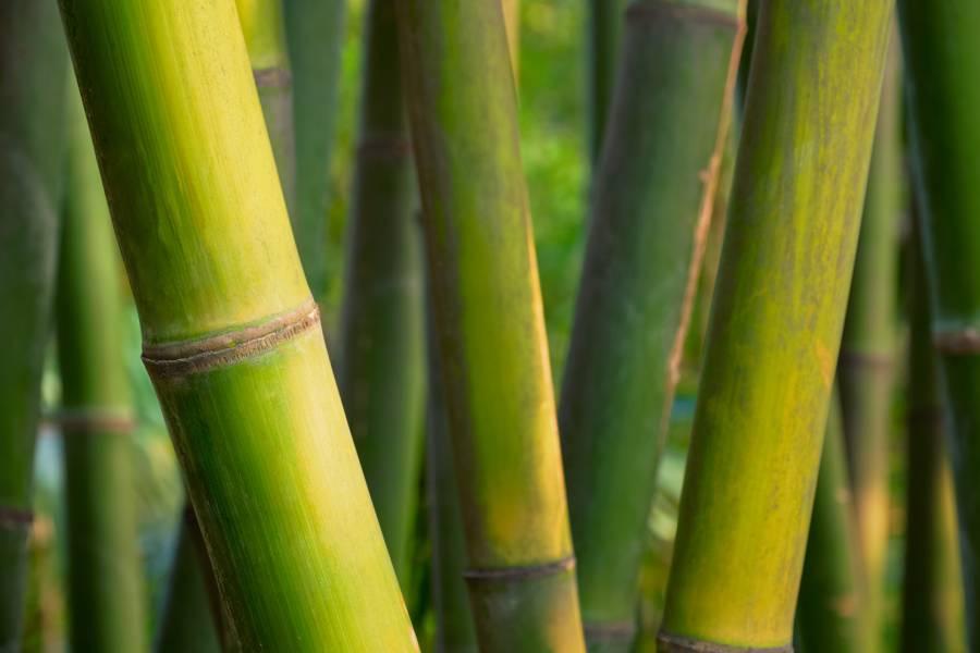 bamboe is milieuvriendelijk
